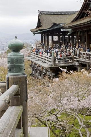 桜と清水寺舞台 世界遺産