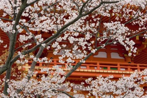 桜と清水寺西門 世界遺産