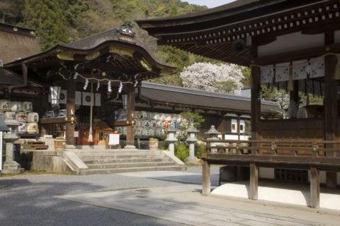 桜と松尾大社