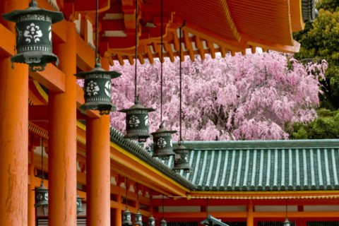 桜と平安神宮回廊