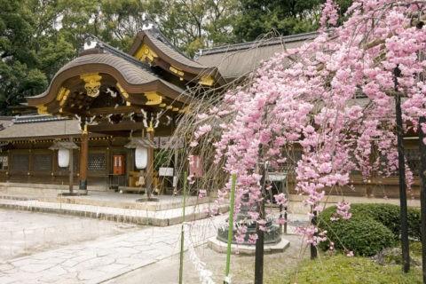 桜と今宮神社拝殿