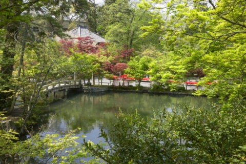 新緑の永観堂禅林寺庭園