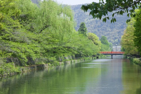 新緑の岡崎疎水