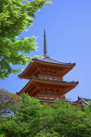 新緑の清水寺三重塔 世界遺産