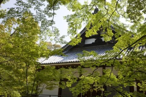 新緑と仁和寺金堂 世界遺産