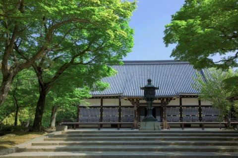 新緑の仁和寺金堂 世界遺産
