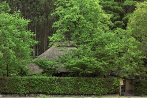 新緑の落柿舎