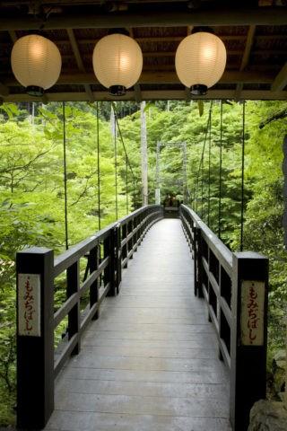 新緑の高雄の吊り橋