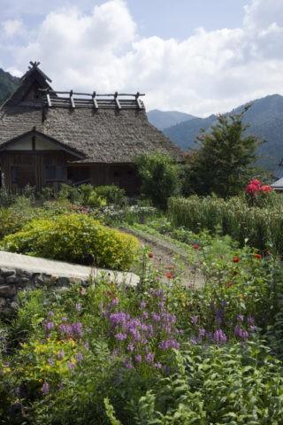 秋の花と美山町の茅葺き民家