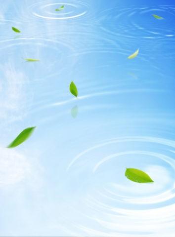 水面に舞う新緑の葉