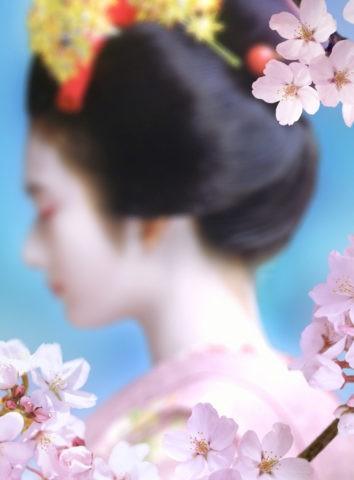 桜と舞妓のイメージ