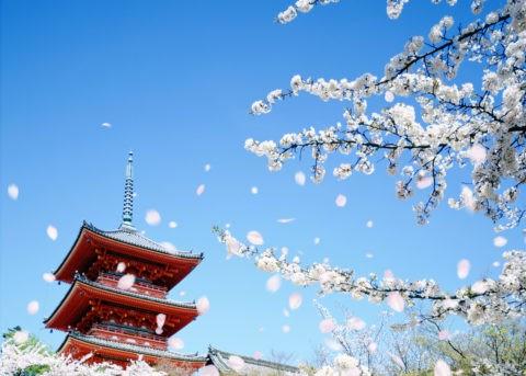 桜吹雪と清水寺三重塔