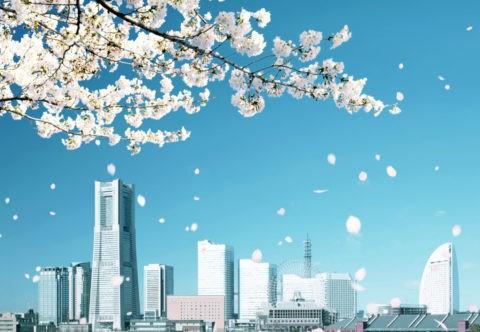 ビル群と桜吹雪
