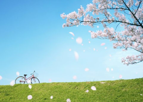 桜吹雪の土手と自転車