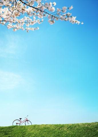 桜と土手の自転車