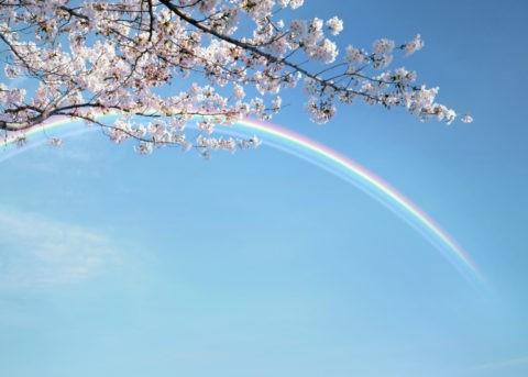 虹のかかる青空と桜