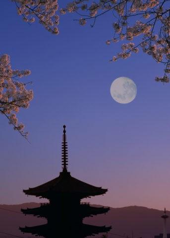 桜と月と塔