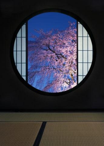 丸窓と夜桜