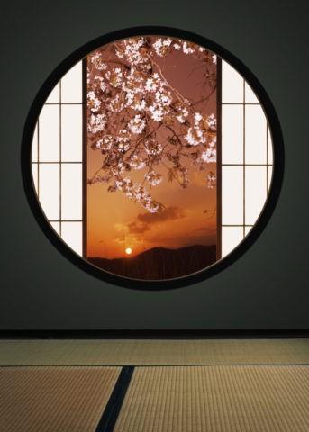 丸窓と夕暮れの桜