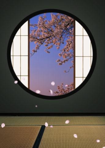 丸窓と桜吹雪