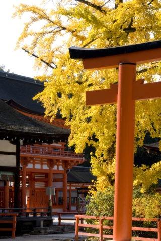 下鴨神社と銀杏 W