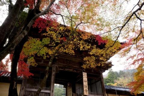 紅葉と高雄神護寺山門