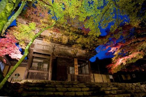 紅葉と高雄神護寺ライトアップ