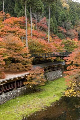 紅葉と清滝川と川床
