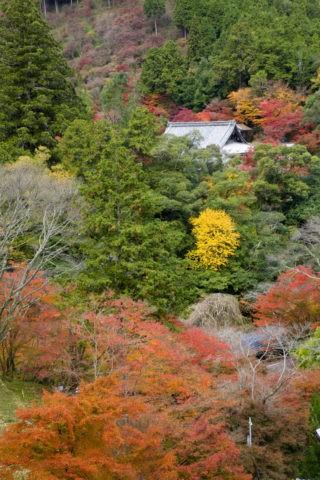 紅葉と高雄西明寺