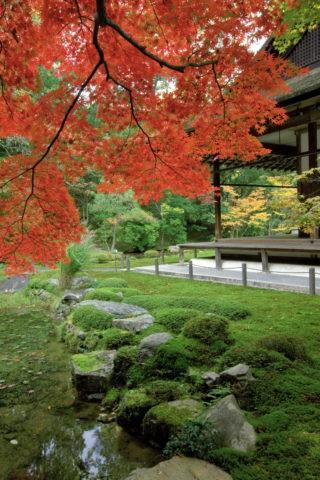 紅葉と南禅寺南禅院