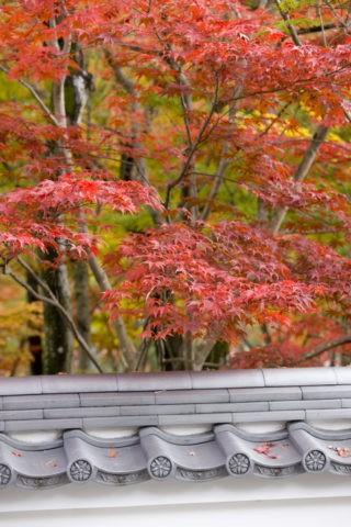 紅葉と土塀