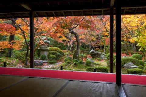 紅葉と圓光寺庭園