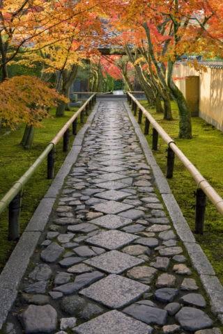 紅葉と光悦寺参道