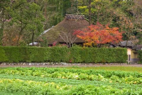 紅葉と嵯峨野落柿舎