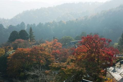 紅葉と善峰寺