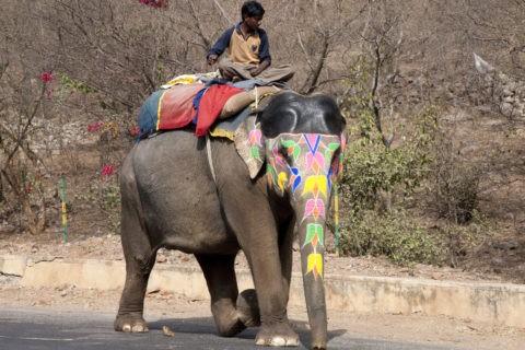 化粧をした象のタクシー
