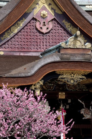 北野天満宮 拝殿と紅梅