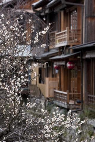 祇園白川の家並みと梅