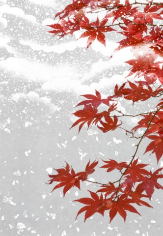 紅葉にかかる雪 背景イメージ CG