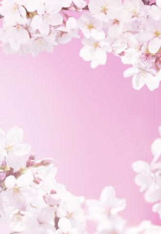 桜のピンクイメージ CG