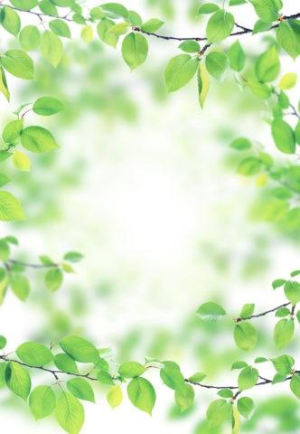グリーンのフレーム