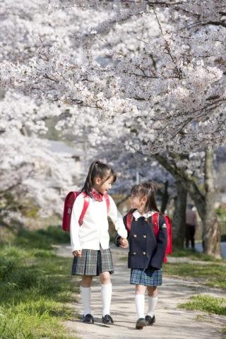 桜の道を歩く小学生