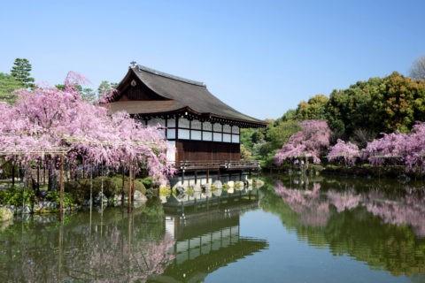 桜と平安神宮神苑