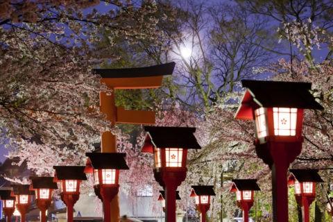 平野神社の夜桜と月