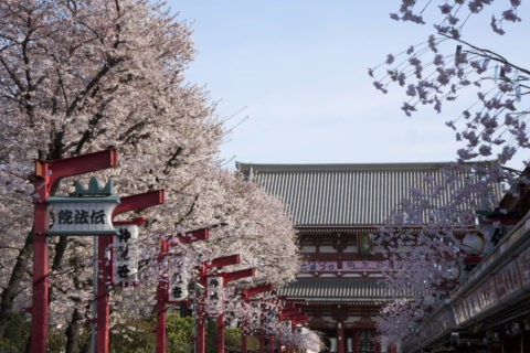 桜と浅草仲見世通り