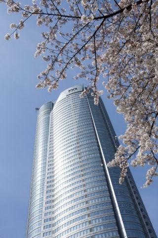 桜と六本木ヒルズ