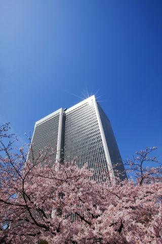 桜とアークヒルズ