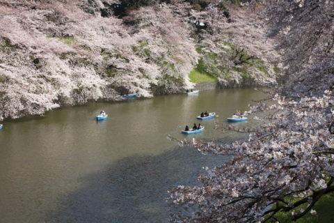 桜の千鳥ケ淵
