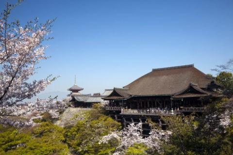 桜の清水寺 w