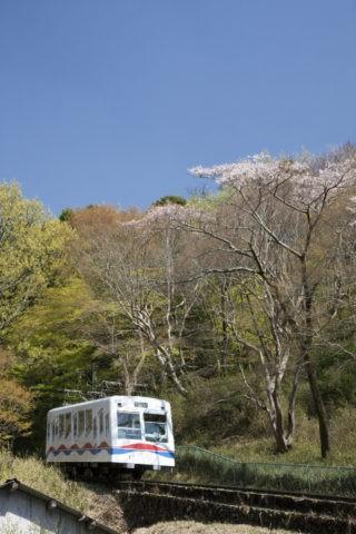 桜の比叡山ケーブルカー